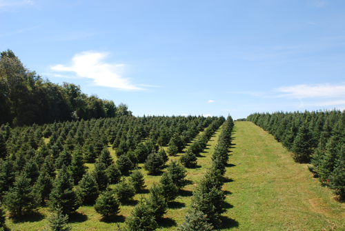 Come Visit Us At Mt. Carmel Tree Farm